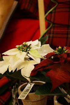 credenza della nonna dalla credenza della nonna dicembre 2010
