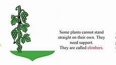 science worksheets for grade 1 types of plants 13715 grade 1 science types of plants