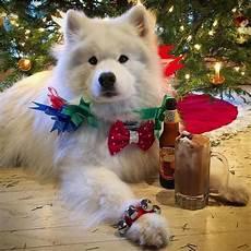 merry christmas you filthy animal christmas dogs 49 photos christmas dog cute animals cute