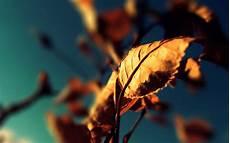 Gambar Gambar Fotografi Keren