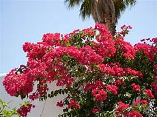 Pflanzen Auf Mallorca Sind Mediterrane Gartenlust Pur Ein
