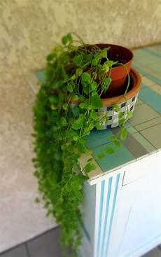 un peu de verdure mille et un 233 clats plante tombante