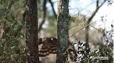 Eulen Malvorlagen Jogja Deaprojekt Natur Tiere Lustige Tiere Bilder