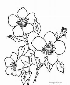 flowers pictures elegant free flower coloring pages for kids