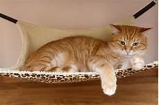 amaca gatto e gattino dormono insieme fotografia stock