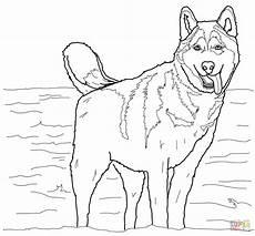 Ausmalbilder Hunde Husky Ausmalbild Siberian Husky Ausmalbilder Kostenlos Zum