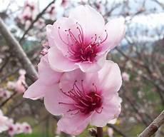 fiore flowers file flowers jpg