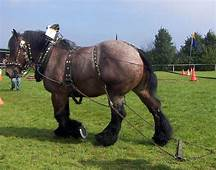 65 Best Images About Work Horses On Pinterest