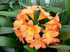 Zimmerpflanze Orange Blüte - 13 pflegeleichte bl 252 hende zimmerpflanzen
