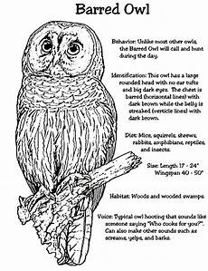 owls coloring pages to and print for free