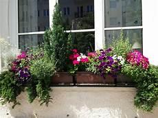balkonkästen bepflanzen ideen balkonkasten bepflanzung mit immergr 252 nen koniferen und