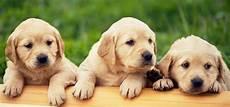 noms de chiens en m pour 2016 ecoledeschiens