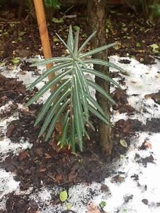 was tun gegen maulwurf pflanze mit zauberkr 228 ften pflanzen botanik