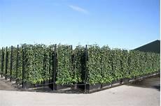 Heckenpflanzen Schmal Pflanzen F 252 R Nassen Boden