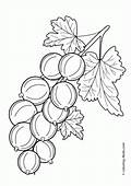 Fruits Coloring Pages For Kids Printable And Online