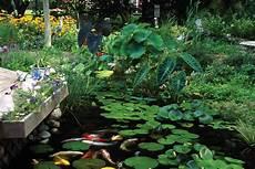 teichpflanzen richtig pflanzen plants for ponds and water gardens hgtv
