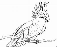 Ausmalbilder Tiere Papagei Papagei Auf Zweig Ausmalbild Malvorlage Tiere