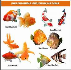 Cara Memelihara Ikan Yang Baik Dan Benar