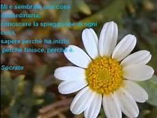 fiore con la a fiori con frasi