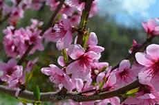 ca fiore frolla al cocco e marmellata di albicocche con farfalle in