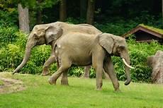 Opel Zoo Adresse - opel zoo adresse moto