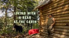 living with a blackbear at the grid cabin in the