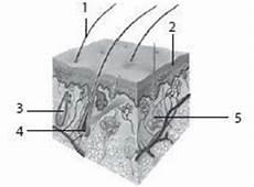 Soal Biologi Sistem Ekskresi 3 Materi Dan Soal Ipa