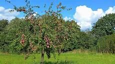 Ein Pflaumenbaum Im Herbst Stockfoto Bild Bl 228 Tter