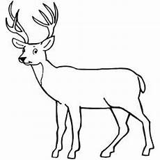 deer coloring pages free on clipartmag