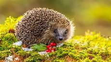 Malvorlagen Igel Herbst Winter So Kommen Igel Am Besten 252 Ber Den Winter The Weather