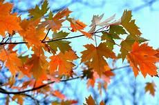 Herbst Malvorlagen Jakarta Hintergrundbilder Sonnenlicht Bl 228 Tter Ast Baum