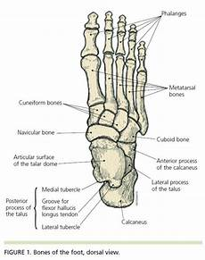 Anatomical Foot Diagram by When An Ankle Sprain Is Not Just An Ankle Sprain