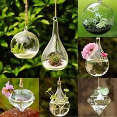 hanging glass ball vase flower plant pot terrarium