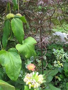 Garten Impressionen Die Ahorn Ecke Im August