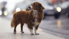 spa mulhouse chien animaux perdus spa de mulhouse