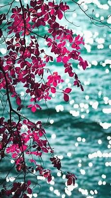 flower wallpaper for phone screen pink aqua floral leaves bokeh sea view iphone phone