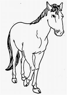 Dunia Sekolah Gambar Hitam Putih Drawing Haiwan