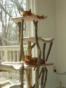 i these cat trees something that looks out in