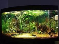 aquarium deko ideen 39 faszinierende aquarium einrichtungsbeispiele und tipps deko feiern zenideen