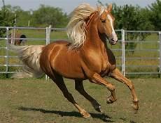 welche pferderasse passt zu mir welches pferd passt zu mir seite 11
