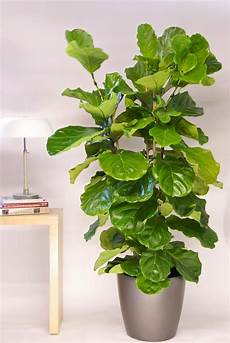 our diverse plant selection greencare interior plants