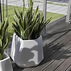 vasi per piante da esterno prezzi scegliere i vasi per piante da esterno scelta dei vasi