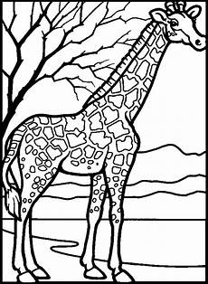 Malvorlagen Giraffe Um Giraffe Ausmalbilder Kostenlos Malvorlagen Windowcolor Zum