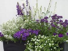 blumenkasten bepflanzen ideen bilder balkon gestaltung mit wei 223 en und blaun pflanzen blumen