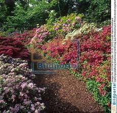 Details Zu 0003154781 Gartengestaltung Gartenweg Mit