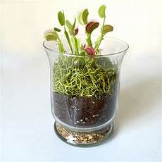 something to eat for a carnivorous plant