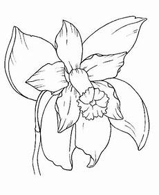 orquidea nacional para colorear dibujos para colorear de la orquidea nacional imagui