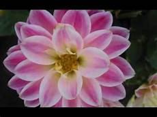 dei fiori sequenza di foto di fiori tutti rigorosamente al naturale
