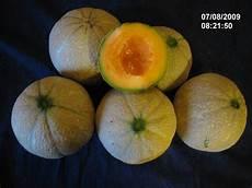 quand cueillir les melons melon cucumis melo