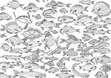 ausmalbilder fur erwachsene fische kinder zeichnen und